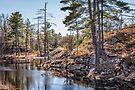The pond by PhotosByHealy