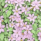 Pink Clematis - coloured line art by PhotosByHealy