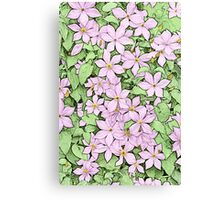 Pink Clematis - coloured line art Canvas Print