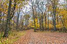 Along the trail by PhotosByHealy