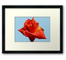 Beautiful Red Rose Photograph Vector Framed Print