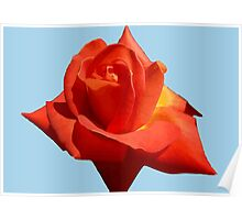 Beautiful Red Rose Photograph Vector Poster