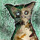 Turtle the turtleshell zombie kitten by byronrempel