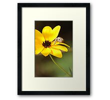 A Pretty Place to Pounce Framed Print