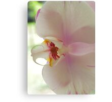 Blushing Bloom Canvas Print