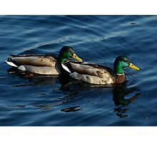 Ducks Cruising Together Photographic Print