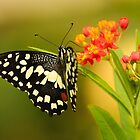 Butterfly #2 by Brian Avery