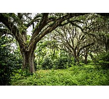 Live Oak with Spanish Moss Photographic Print
