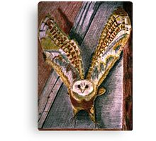Ghost Owl  in flight colored pencils drawing Canvas Print