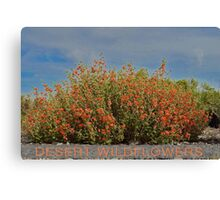 Orange Desert Wildflowers In Full Bloom Canvas Print
