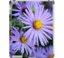 Hardy Blue Aster Flowers iPad Case/Skin
