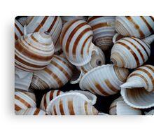 Stripey Shells Canvas Print