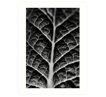 Leaf veins and texture Art Print