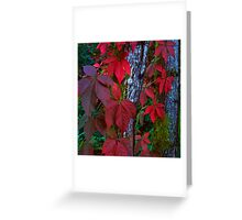 Vine Maple 377B - Full Color Greeting Card