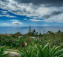 Madiera the beautiful Island by Martyn Franklin