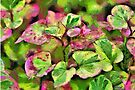 Chameleon by PhotosByHealy