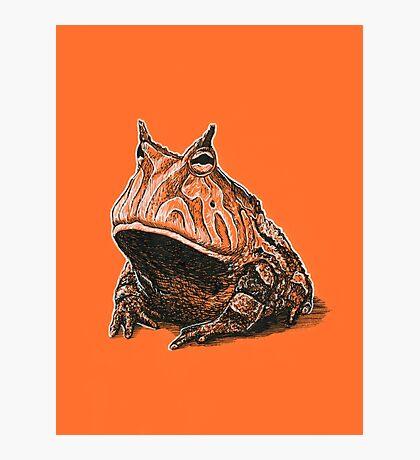 Orange Frog Photographic Print