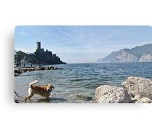 lake whit dog Metal Print