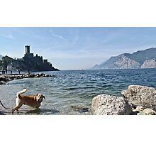 lake whit dog Photographic Print