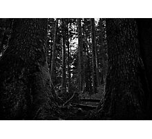 Among giants Photographic Print