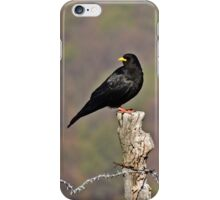Crow - Bird iPhone Case/Skin