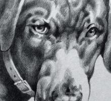 """Black Labrador - """"You're Kidding!"""" Sticker"""