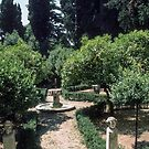 Orange grove garden Palazzo du Conservatore Rome Italy 19840719 0028 by Fred Mitchell