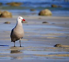 A Bad Company Seagull by LjMaxx