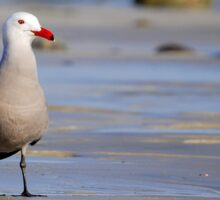 A Bad Company Seagull Sticker