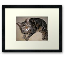 Tabby Cat with green eyes Framed Print