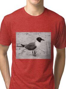 Little Gull Tri-blend T-Shirt