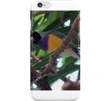 Multi-Colored Finch iPhone Case/Skin
