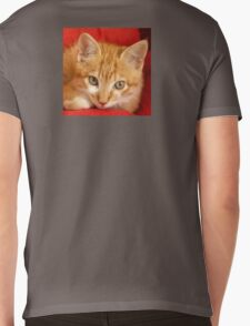 Beautiful red hired kitten Mens V-Neck T-Shirt