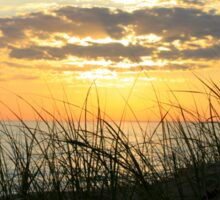 Dune Grass at Sunset Sticker