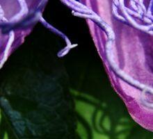 Purple Passiflora Sticker