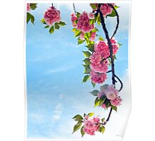 Blooming Blossoms  Poster