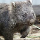Fatso The Wombat by UncaDeej