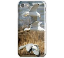 Seagulls - Nature - Photograph iPhone Case/Skin