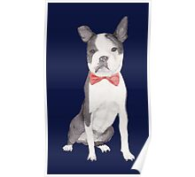 Leo the Boston Terrier Poster