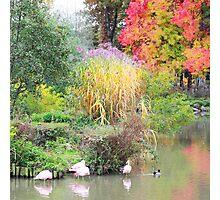 Landscape #6 - autumn colors Photographic Print
