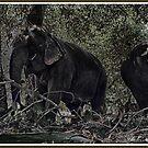 Jungle by Dr. Harmeet Singh