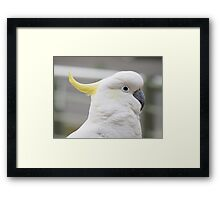 Hello Cocky! Framed Print