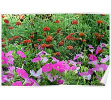 Beautiful colorful red and purple flowers in the garden. Poster