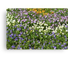 Many small flowers in the garden. Canvas Print