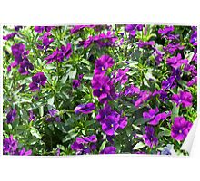 Beautiful purple flowers in the garden. Natural background. Poster