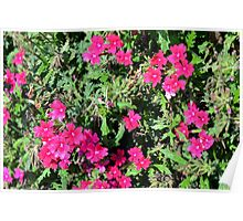 Beautiful pink flowers in the garden. Natural background. Poster