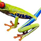 Tree Frog by ImageMonkey