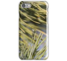 Green pine branch after the rain  iPhone Case/Skin
