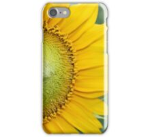 sunflower on green background in Sunny weather iPhone Case/Skin