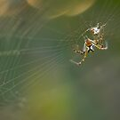 Spider and it's Web by Danielle Espin